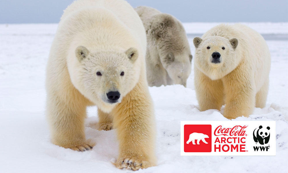 Three polar bears and a commercial banner