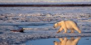 Obama Proposes New Protections For Arctic National Wildlife Refuge
